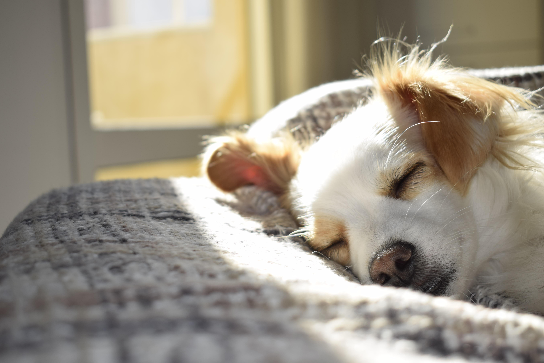 Home Health Hint: Sleep
