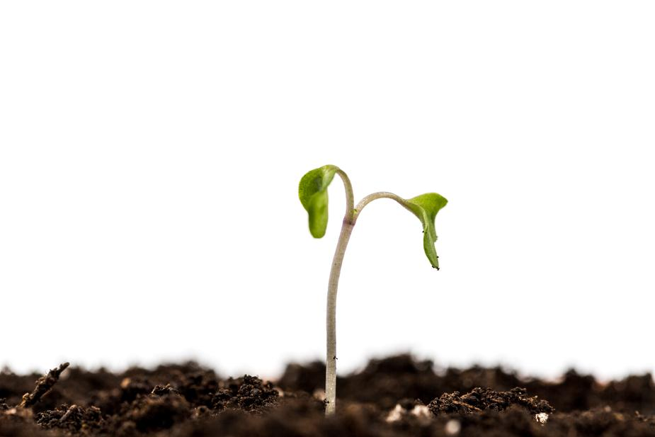Home Care Seedling